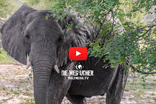 Elefanten im Kruger National Park, Safari, Afrika, Weltreise, Arkadij und Katja aus Bremerhaven