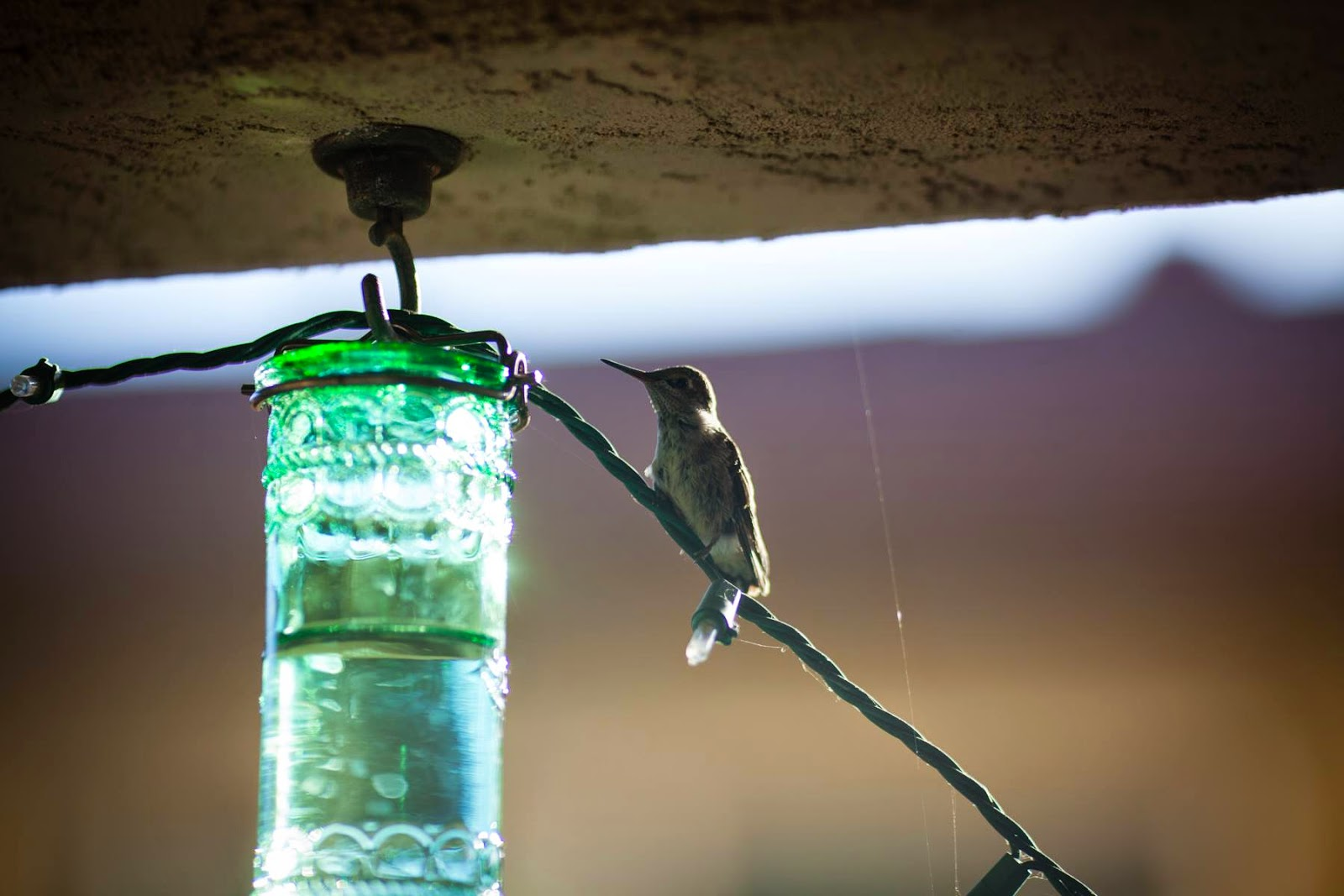 Hummingbird by a hummingbird feeder