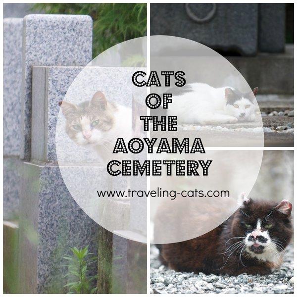 aoyama cemetery tokyo