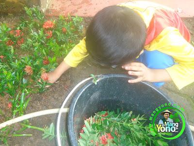 Mengajarkan Anak Menanam Bunga Sejak Dini