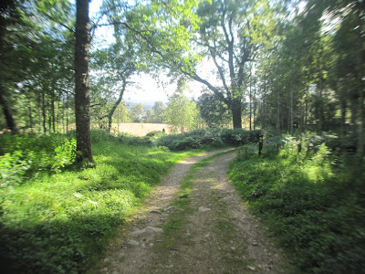 A foot path leading down to Loch Kinord