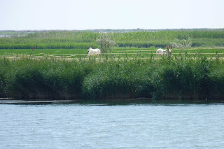Crucero por el Ebro.
