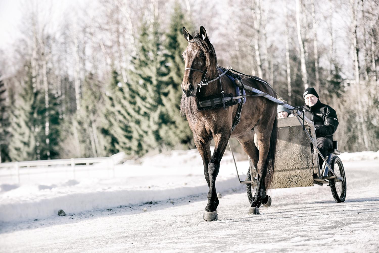 Urjala, hevonen, talli, hevostalli, valokuvaaja, Frida Steiner, visualaddict, visualaddictfrida, horses, horse stable, animal