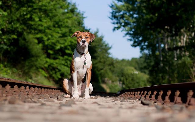 Hond op het spoor