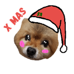 Christmas cat and dogs