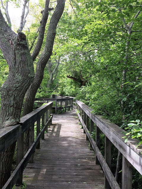 winding wooden bridge through covering trees