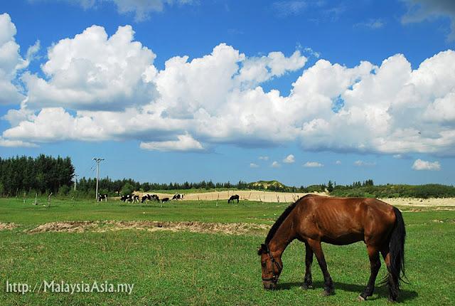 Horse at Wafang Desert