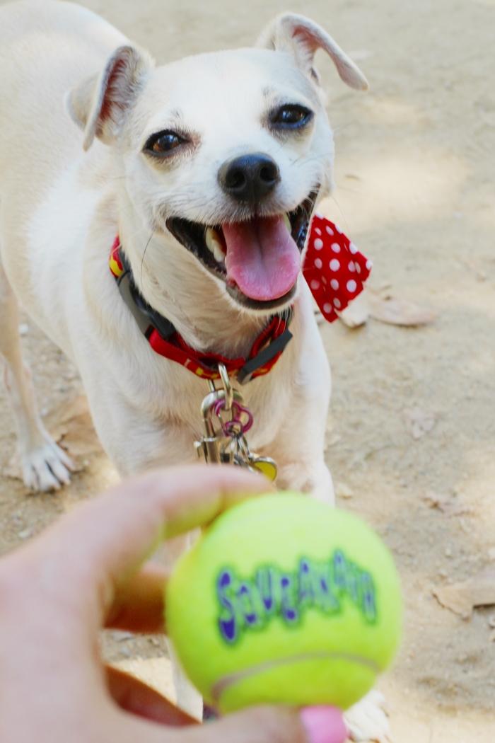 Image Result For Dog Tennis