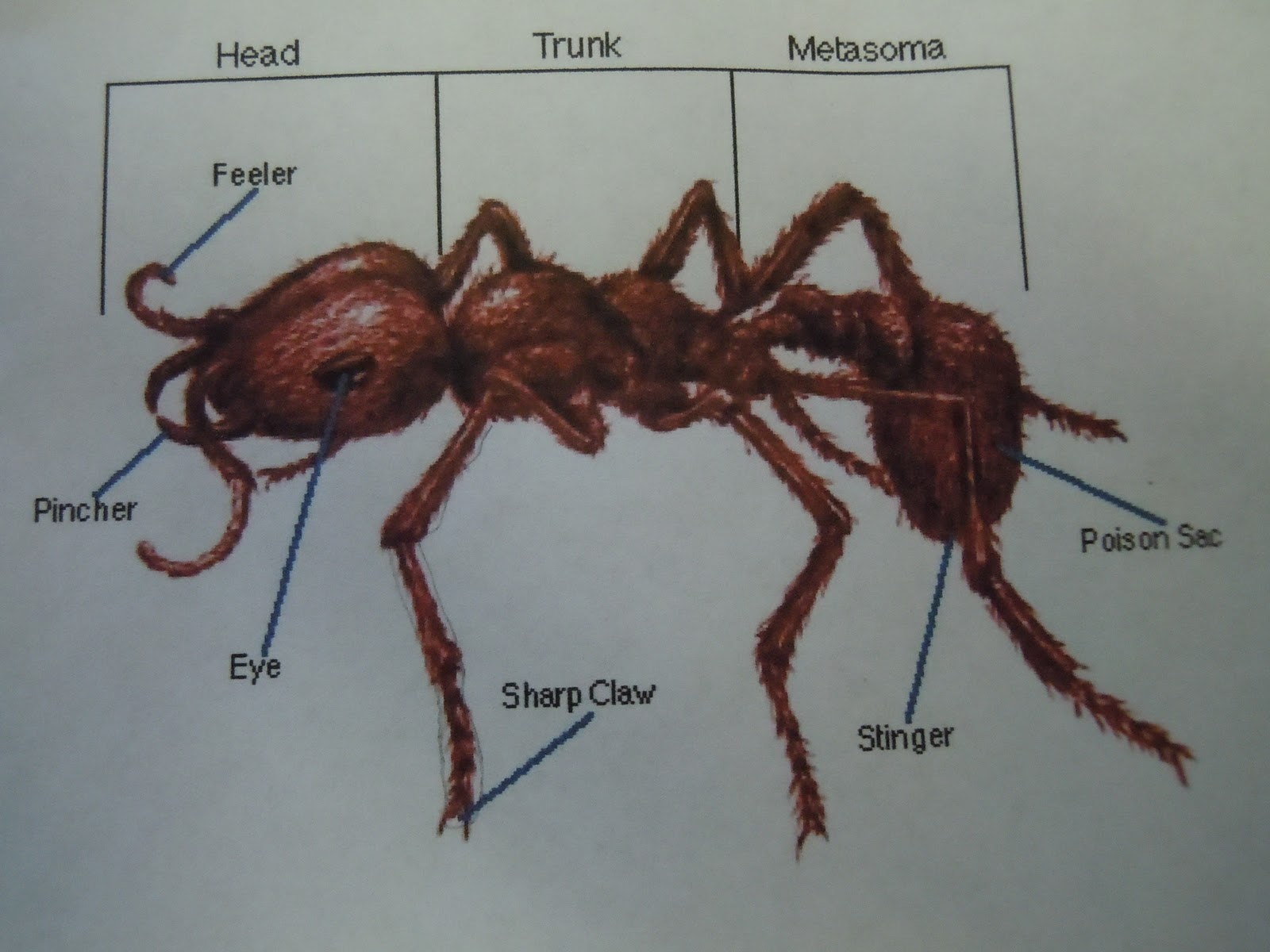 ant parts diagram wiring basics kindergarten and first grade ants