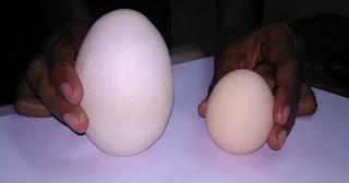 mengapa telur ayam besasrnya sejat raya