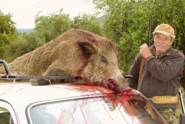 Κυνήγι Αγριογούρουνου video