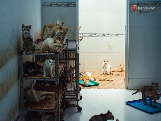 Ngôi nhà tràn ngập những chú mèo với đôi mắt buồn tênh.