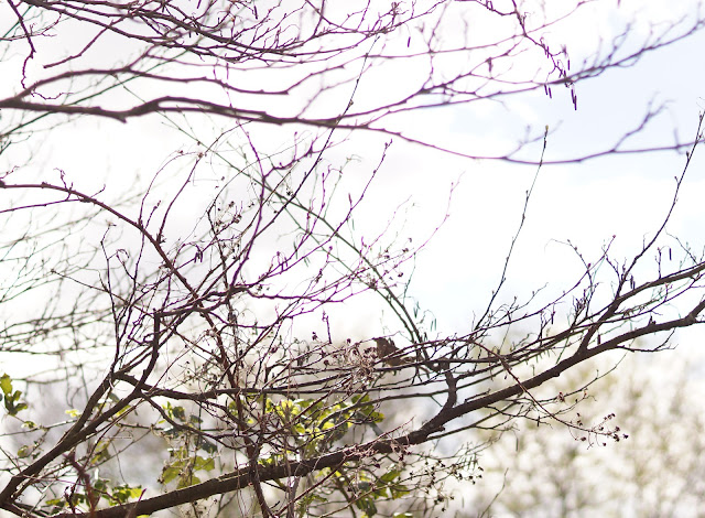 one fine day in Norfolk springtime