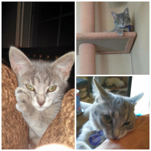 3 photos of baby #MollyMew- CarmaPoodale