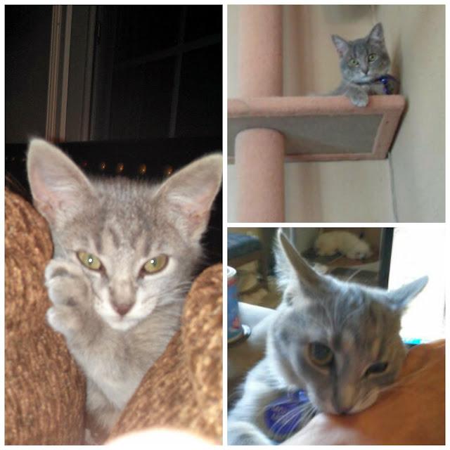 3 photos of baby #MollyMew- CarmaPoodale
