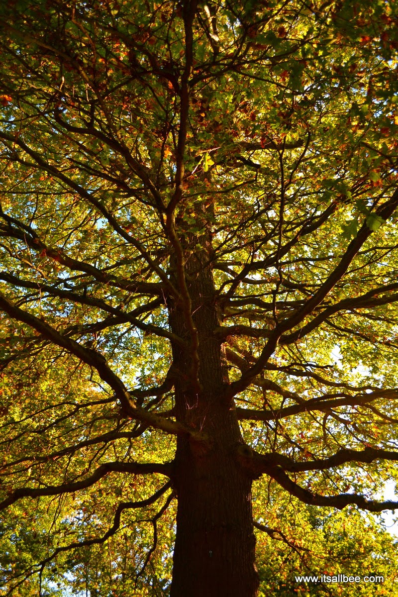Richmond Park | Colours of Autumn