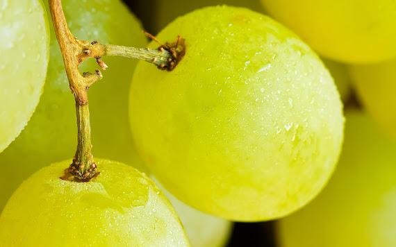 Bijelo grožđe download besplatne pozadine za desktop 1440x900