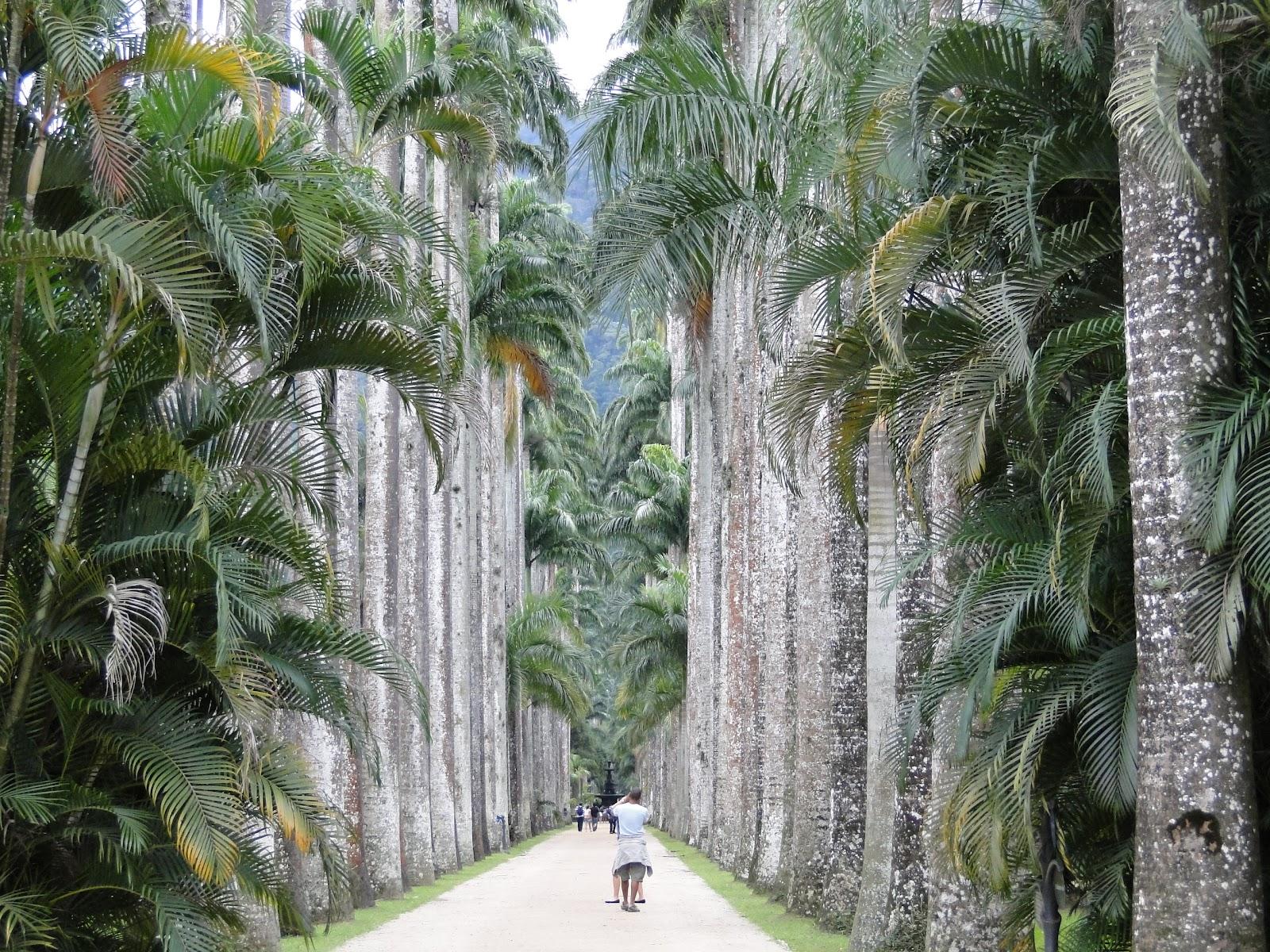 fotos jardim botanico do rio de janeiro: imperiais o Jardim Botânico tem cerca de 200 espécies de palmeiras
