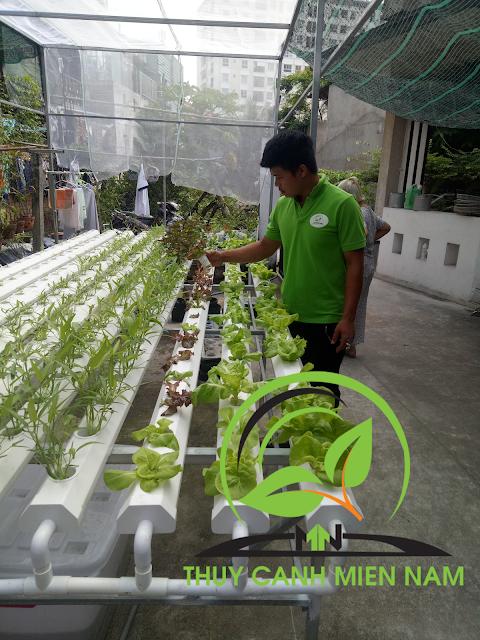sử dụng dung dịch trồng rau thủy canh đúng cách