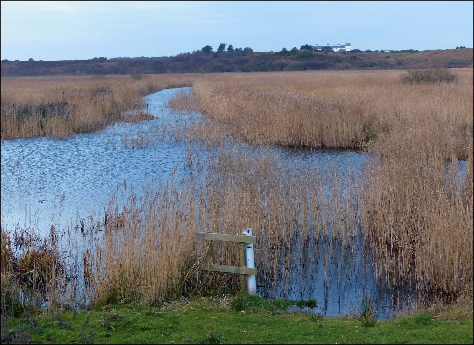 Minsmere Nature Reserve, Suffolk - The RSPB
