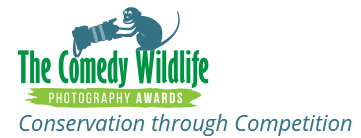 The Comedy Wildlife Photography Award - Conservation through competition