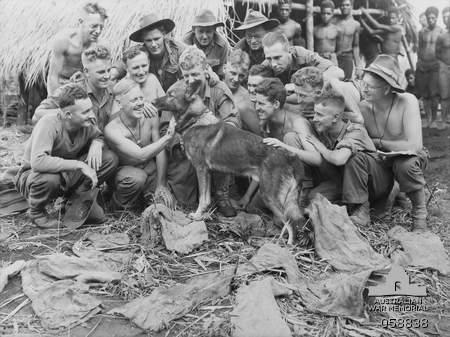 Cat Island War Dog Reception And Training Center