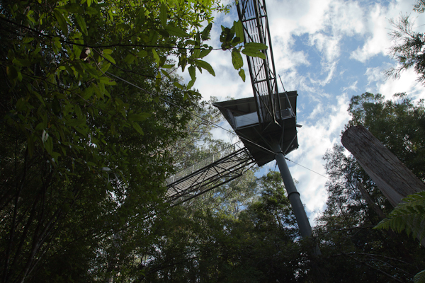 new product f01d3 b3e38 The Airwalk varies between 25 and 45 metres in height and the walk is more  than ½ a kilometre. I took this photo from the forest floor.