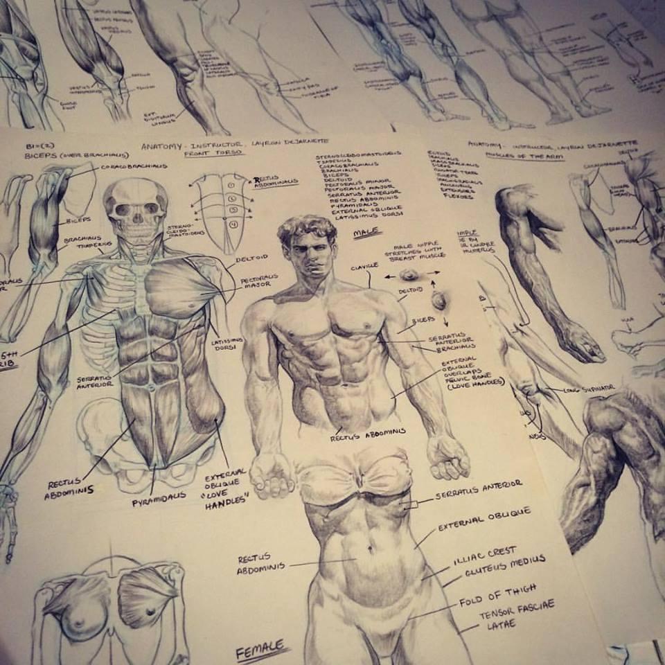 DeJarnette Designs: Old Anatomy Notes