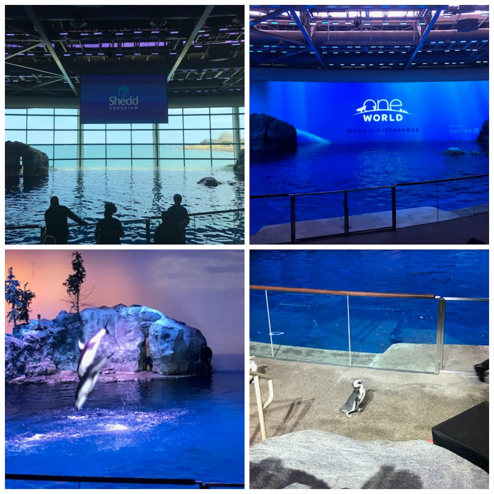 Mommy 39 S Favorite Things Shedd Aquarium In Chicago Review