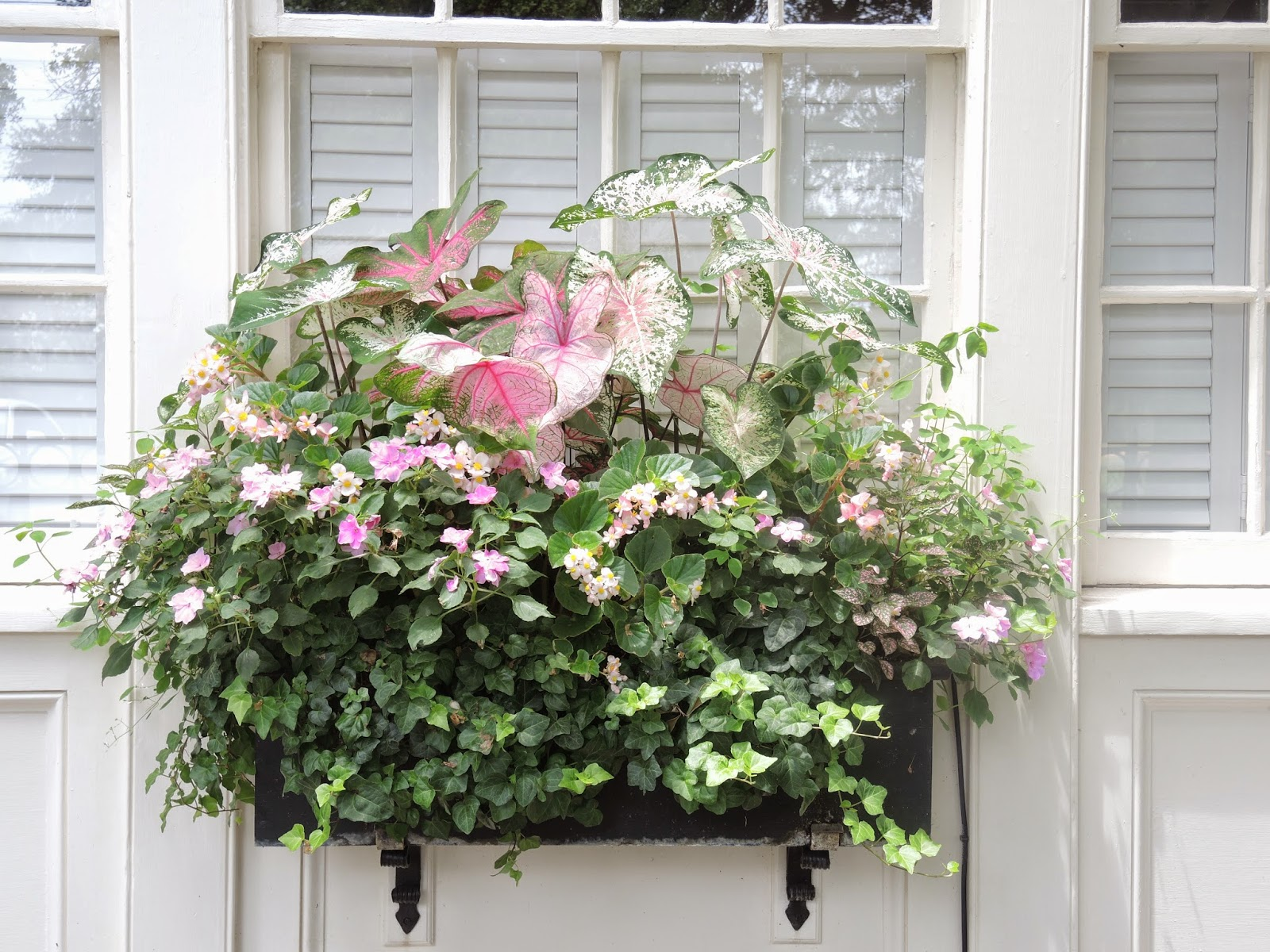 southern states window box shade