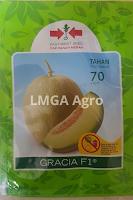 jual benih melon gracia,benih melon gracia,melon gracia,budidaya melon,benih melon,lmga agro