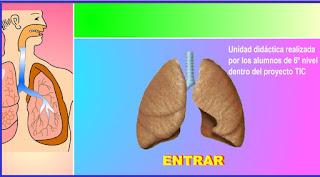 http://www.ceiploreto.es/sugerencias/averroes/manuelperez/udidacticas/udanatomia/respiratorio/index.htm