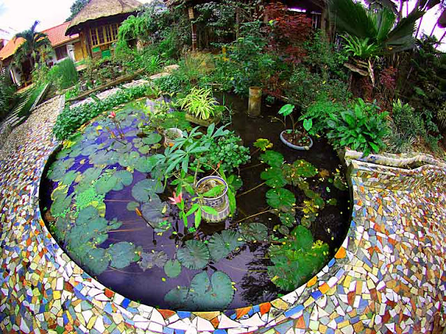 How to Make Your Own Lotus Garden