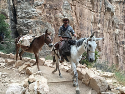 Roadtrip USA on the road again - Grand Canyon cheval