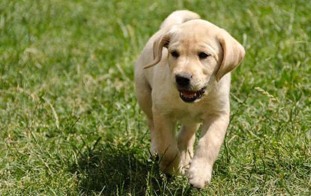 200 nomes criativos para o seu cachorro