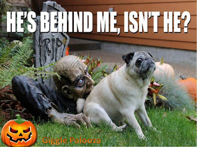 Funny Happy Halloween Pictures