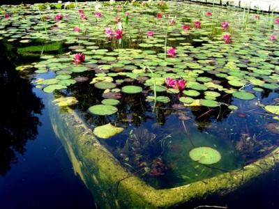 como hacer un estanque en mi jardin y no morir en el intento