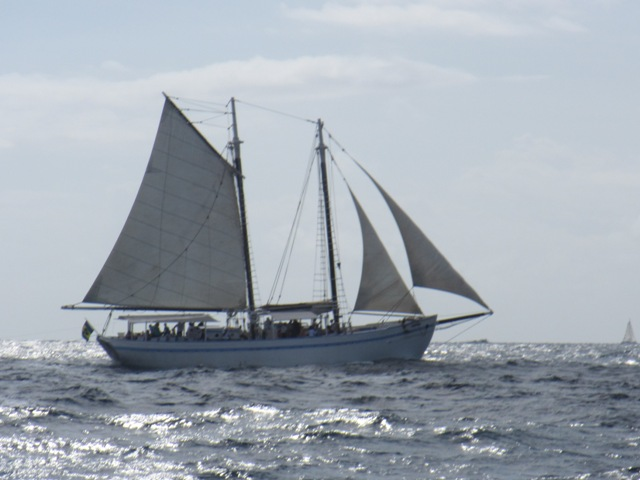 Image result for Friendship Rose SAILING is the wind