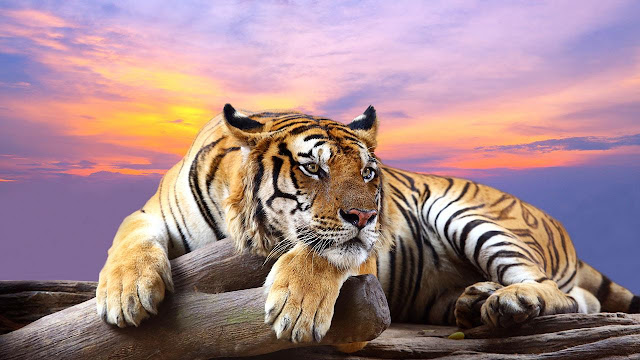 Beautiful animals wallpaper & backgrounds #60