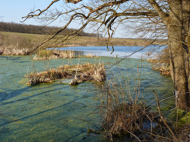 Lacul Căldărușani, Codrii Vlăsiei