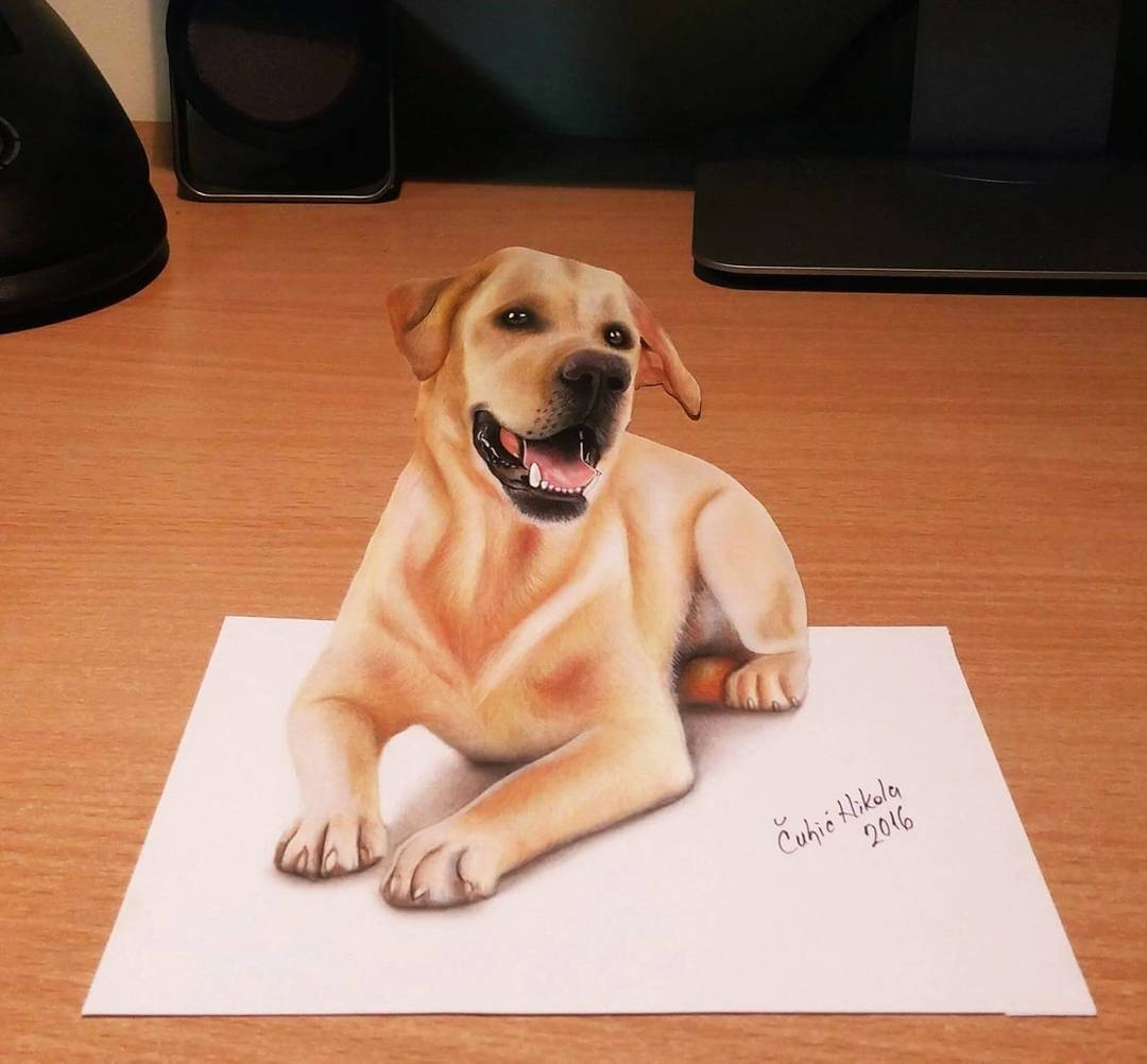04-Labrador-Retriever-Nikola-Čuljić-2D-Realistic-Drawings-that-look-3D-and-a-Video-www-designstack-co