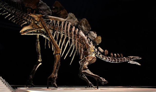 The Butterfly Balcony: Wendy's Week - A Stegosaur & A Self Draft Skirt  - Natural History Museum