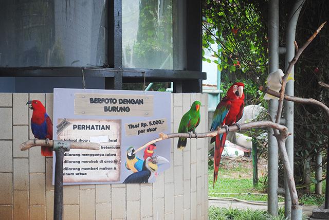 Taman Burung, Taman Mini Indonesia Indah [TMII]-berfoto