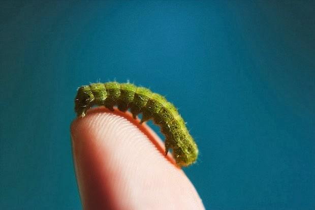 tinny animals on fingers5