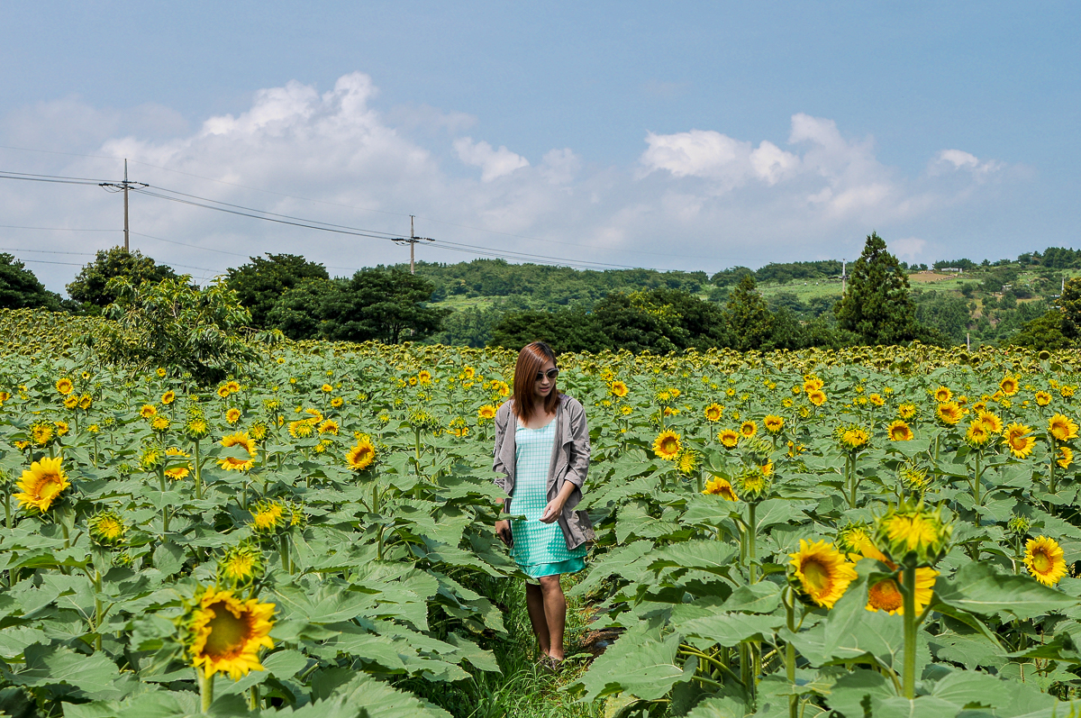 sunflower field jeju korea ootd fashion summer outfit travel