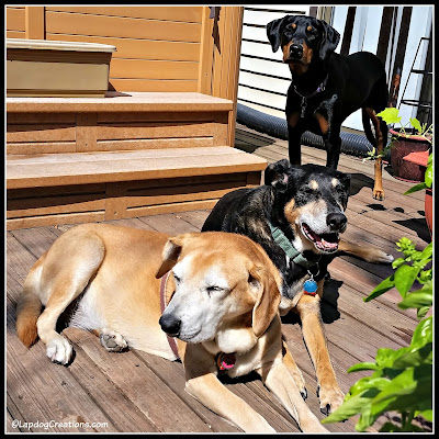3 dogs relaxing on the deck in summer