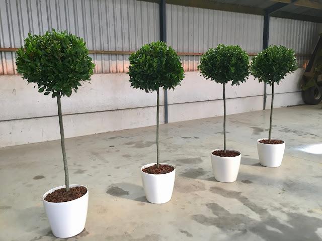 Plantenverhuur of planten huren voor afscheiding afscherming op beurs trouw communiefeest babyborrel opendeurdag happening