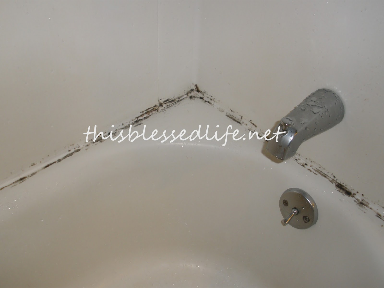 This Blessed Life Getting Mold Out Of The ShowerBefore After - How to get rid of mold in bathroom grout