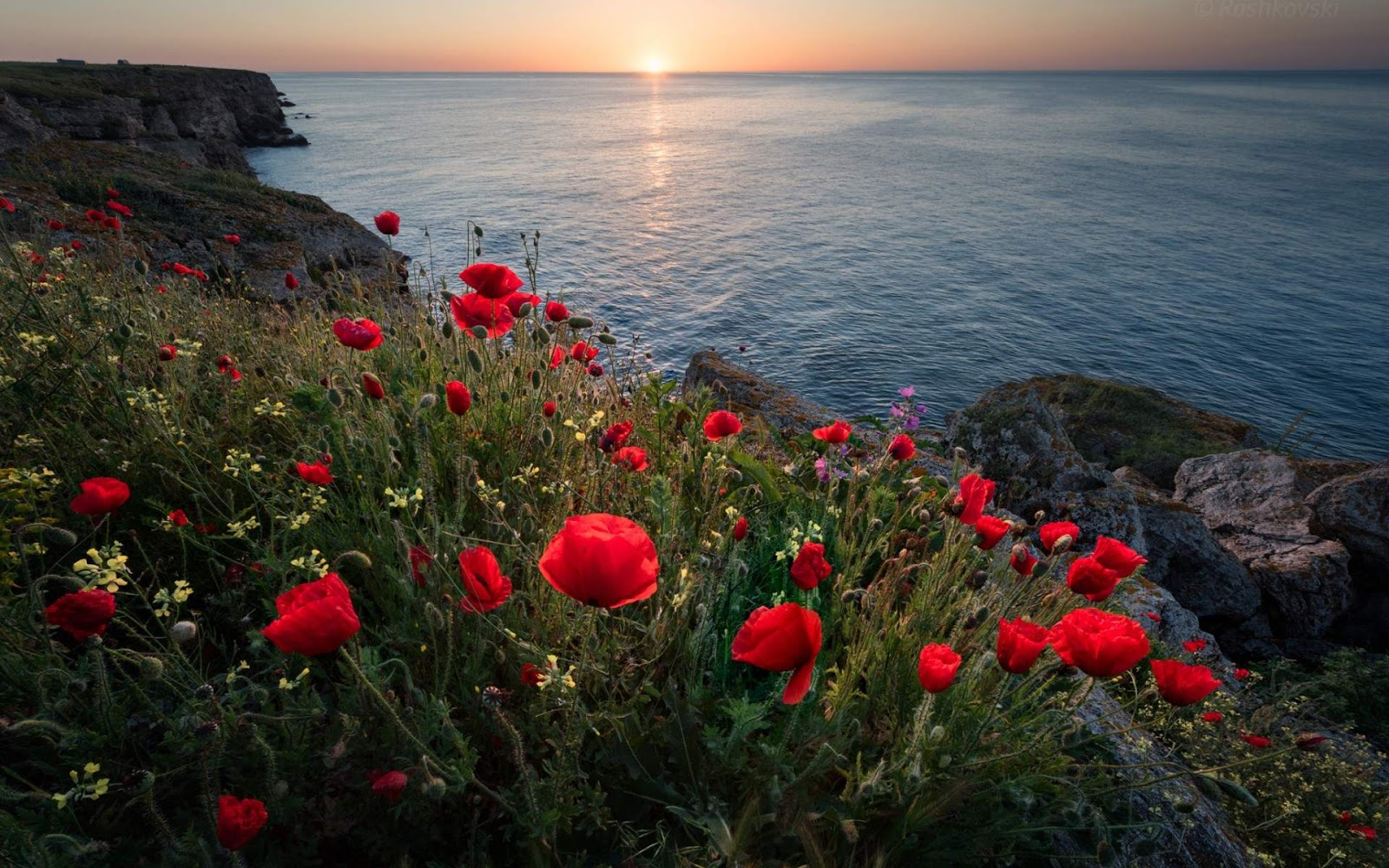 Mountain Flowers and Red Sea Morning Wallpaper