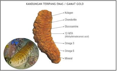 Obat Tradisional Tendinitis (Radang Tendon)